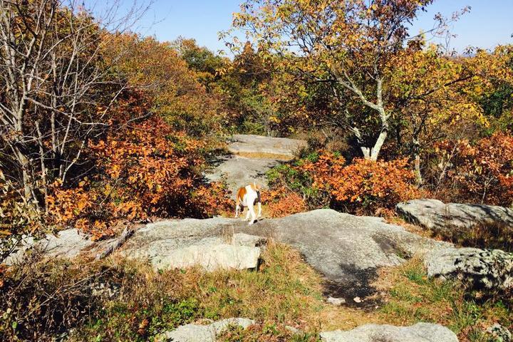 Pet Friendly Sterling Ridge to Lake Trail Loop