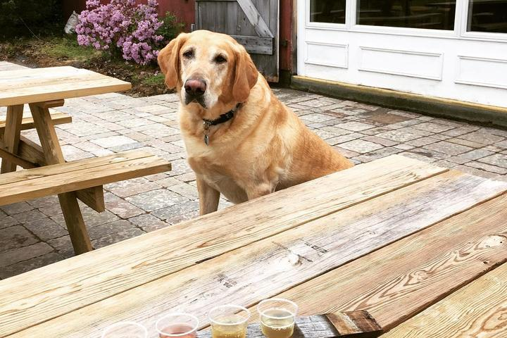 Pet Friendly Woodside Orchards