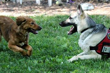 Pet Friendly Hatfield Dog Park