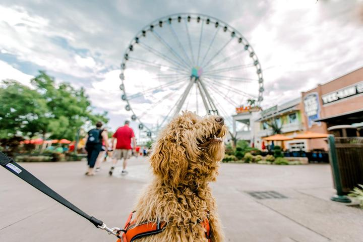 Pet Friendly The Island in Pigeon Forge