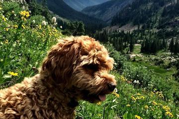 Pet Friendly Pitkin Lake Trail