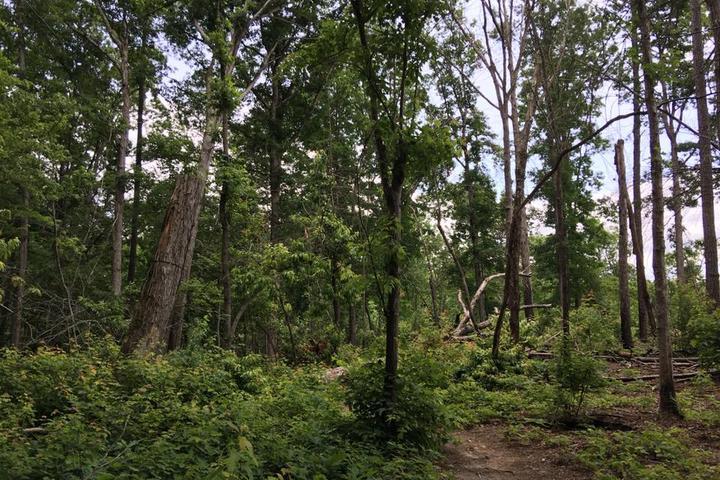 Pet Friendly Densons Creek Nature Trail