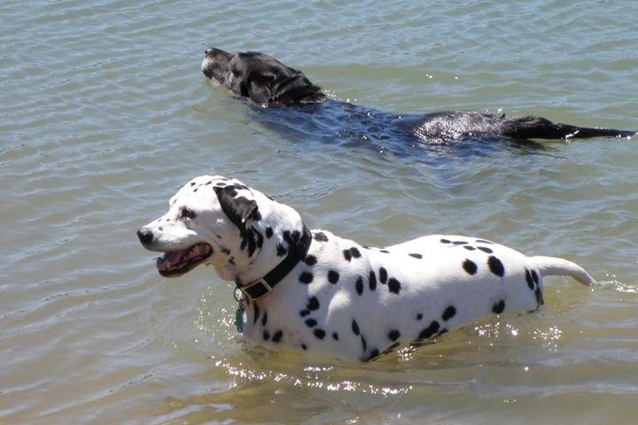 Pet Friendly Tom Harvey Memorial Dog Park