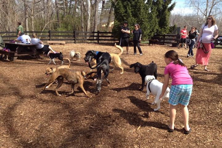 Pet Friendly Leesburg Dog Park at Olde Izaak Walton Park