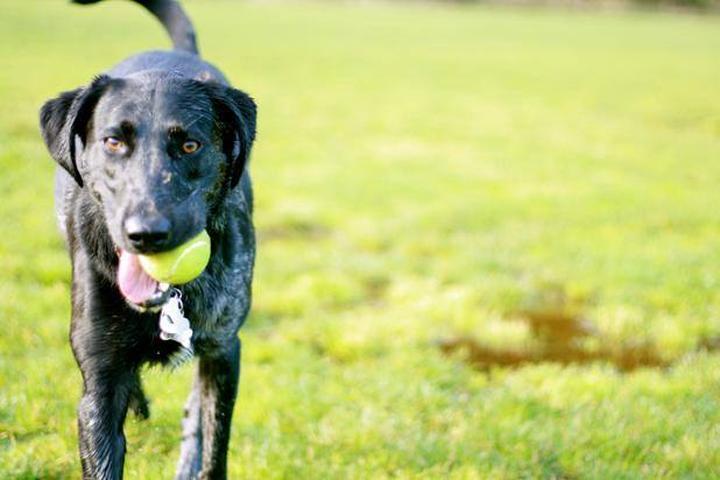 Pet Friendly Osborn Dog Park or Erie MetroBark Park