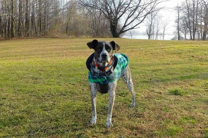 Pet Friendly Pelham Bay Park Dog Run