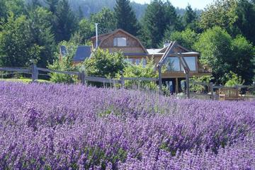 Pet Friendly Sacred Mountain Saltspring