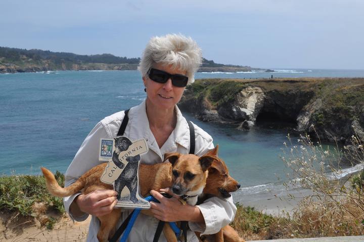 Pet Friendly Mendocino Headlands State Park