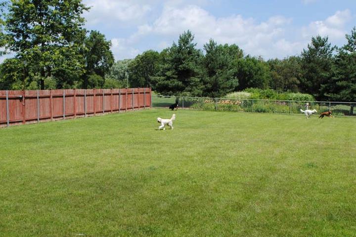Pet Friendly Kristi B's Best Dog Retreat West Chicago