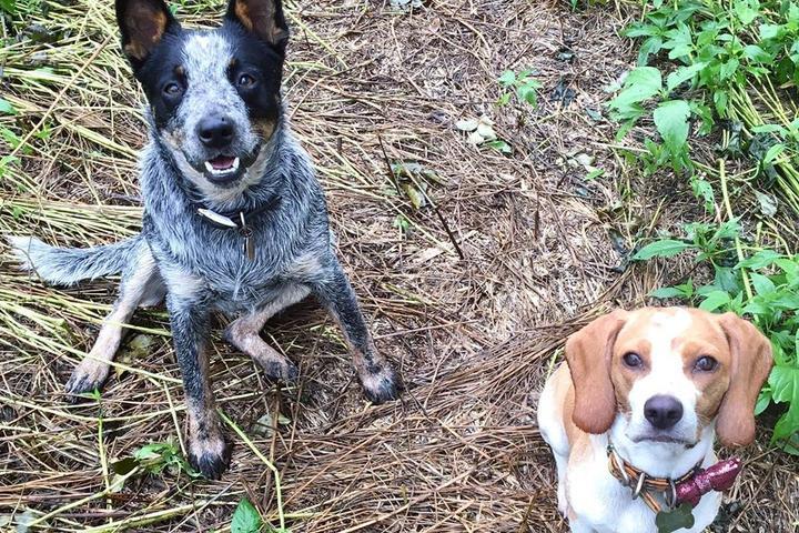 Pet Friendly Bunker Hills Regional Dog Park