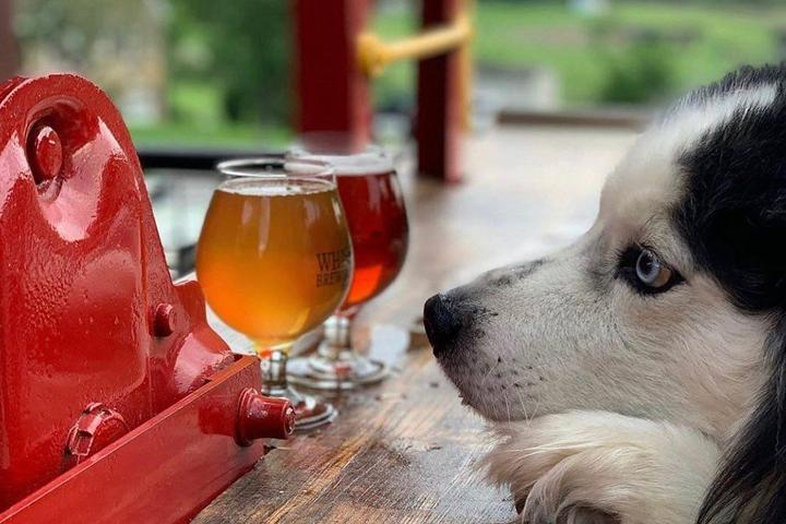 Pet Friendly Whistle Hop Brewing Company