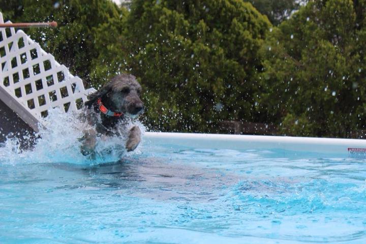 Pet Friendly Ocala Dog Ranch
