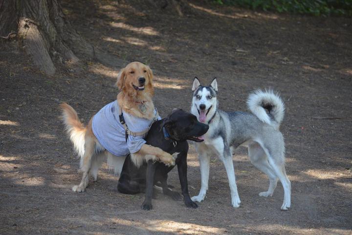 Pet Friendly University Terrace Dog Run