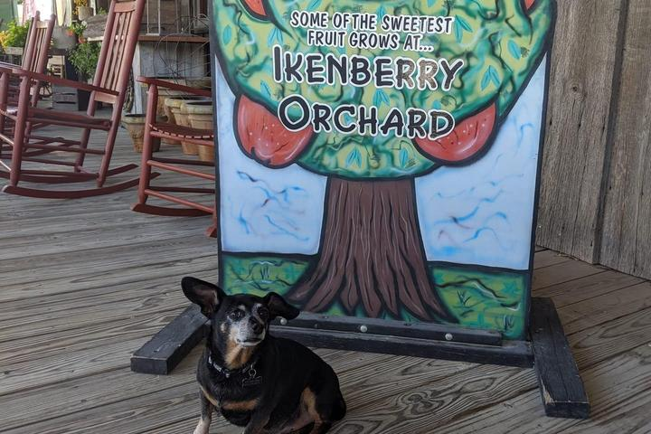 Pet Friendly Ikenberry Orchards
