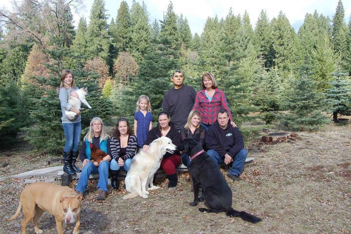 Pet Friendly Harris Tree Farm