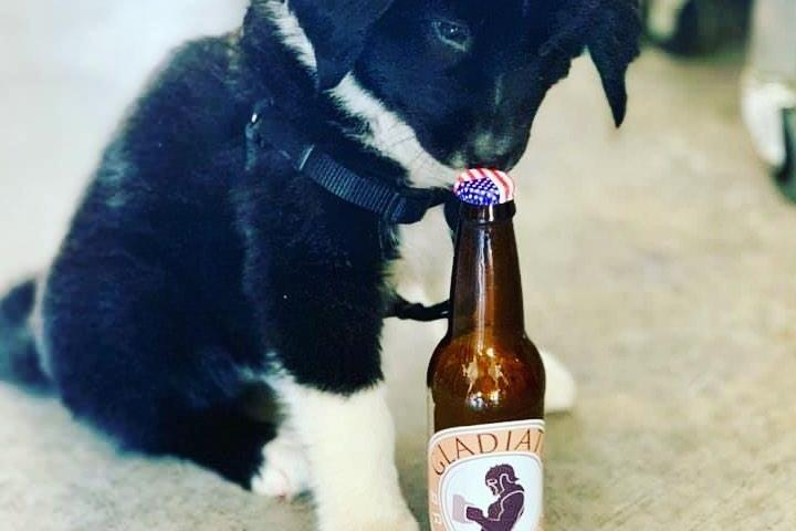 Pet Friendly Gladiator Brewing Co.