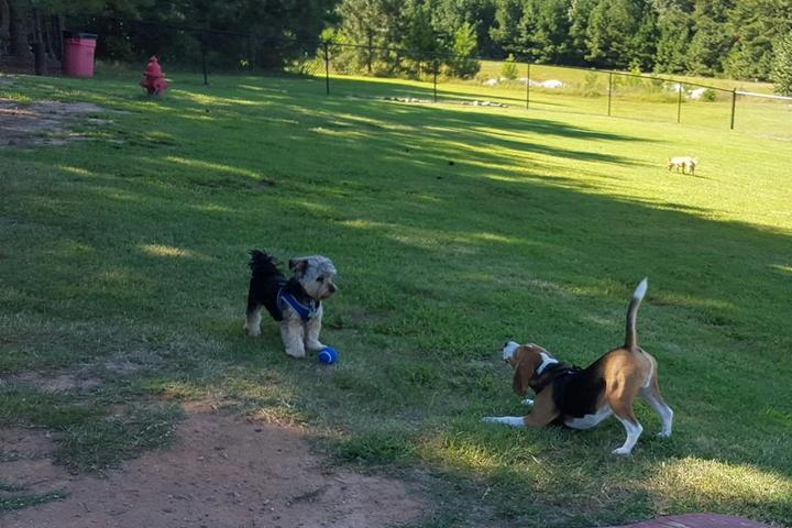 Pet Friendly North Mt. Carmel Bark Park