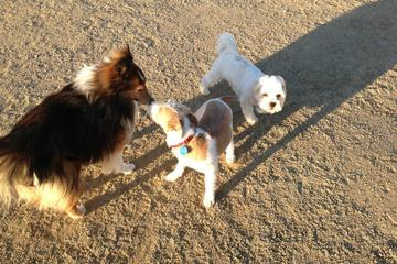 Pet Friendly North Natomas Regional Dog Park