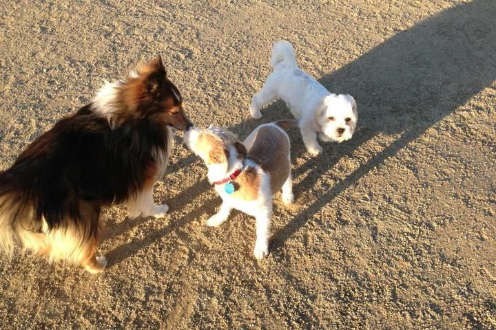 Pet Friendly North Natomas Regional Dog Park