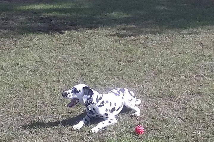 Pet Friendly Riverside Dog Park