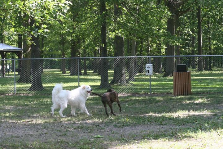 Pet Friendly Park 4 Paws Avon Lake Dog Park