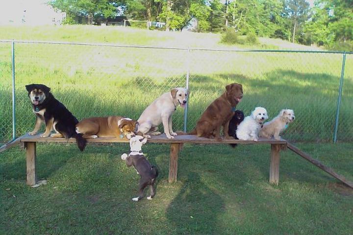 Pet Friendly Tri-Valley Trail
