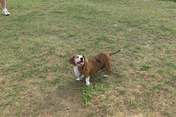 Off Leash Dog Parks In Windsor Co Bringfido