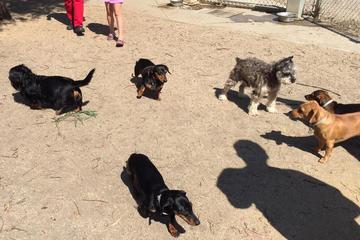 Pet Friendly Reed Street Dog Park
