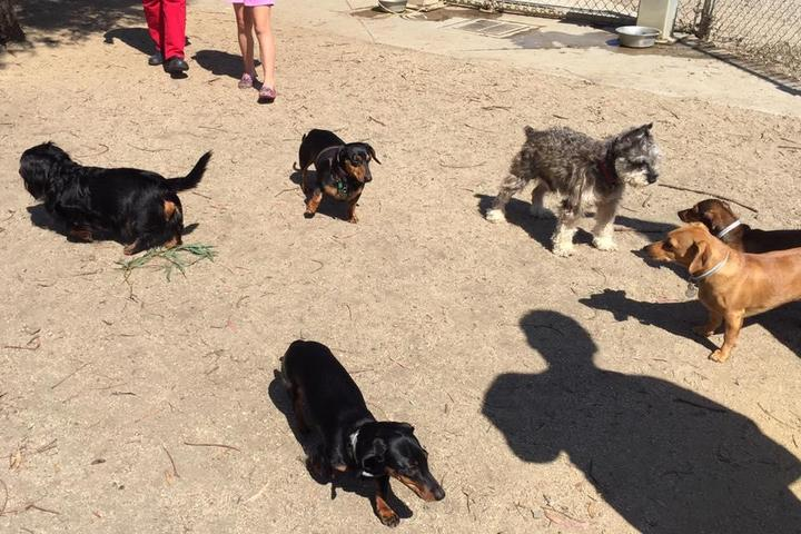 Pet Friendly Reed Street Dog Park
