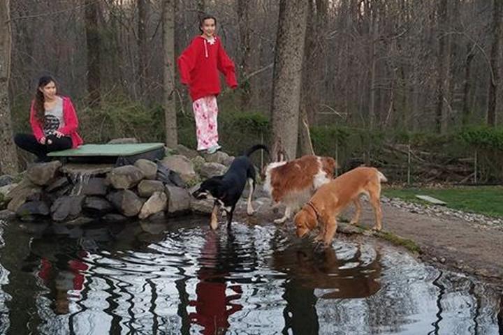 Pet Friendly Rocky Top Dog Park