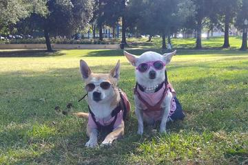 Pet Friendly Roxbury Park