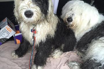 Off Leash Dog Parks In Richmond Va Bringfido