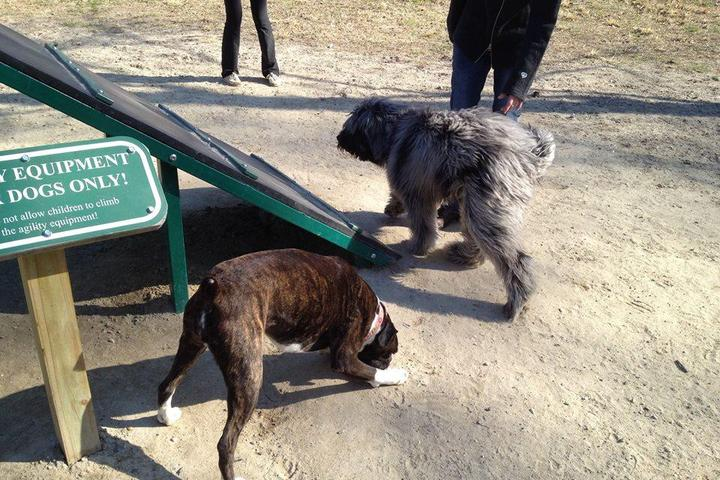 Pet Friendly Salisbury Dog Park