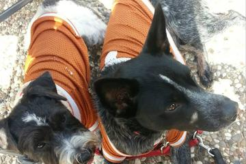 Pet Friendly San Marcos Dog Park at Memorial Park