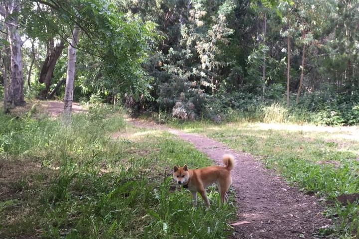 Pet Friendly Shurtleff Park Dog Park