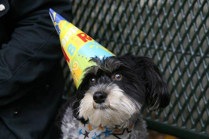 Pet Friendly Sierra Madre Dog Park