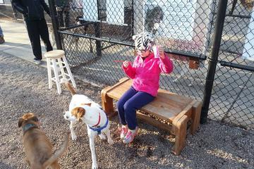 Pet Friendly South Boston Dog Park