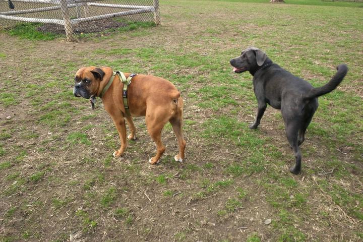 Pet Friendly Spencer's Run Dog Park at Waveny Park