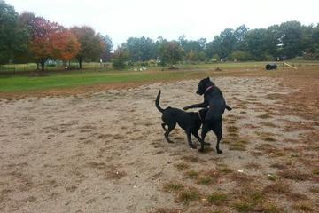 Pet Friendly Starr Farm Dog Park