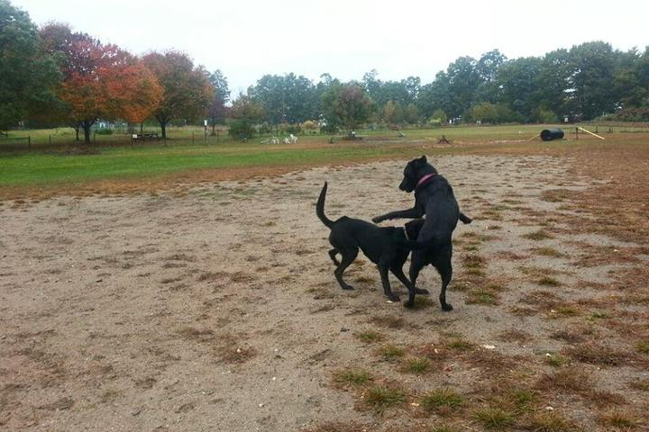 Pet Friendly Starr Farm Dog Park