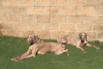 Pet Friendly Swanson's Streamway Dog Park