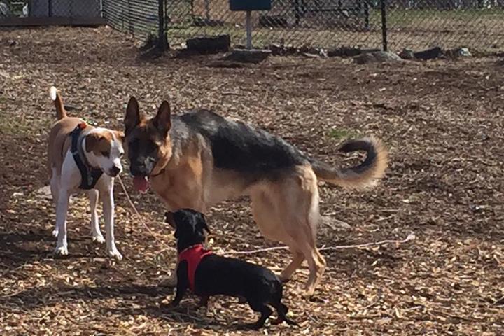 Pet Friendly Trumbull Dog Park at Indian Ledge Park