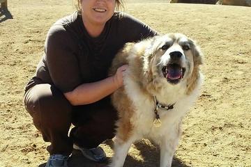 Pet Friendly Valmont Dog Park
