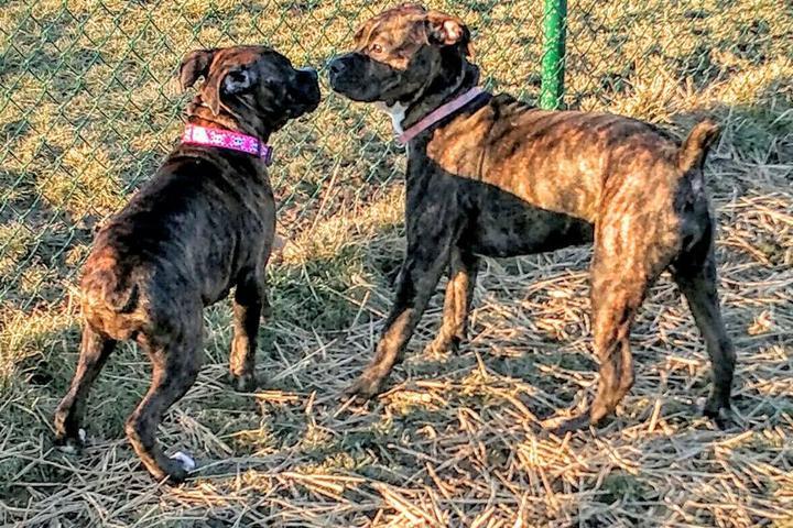 Pet Friendly Violet Township Dog Park