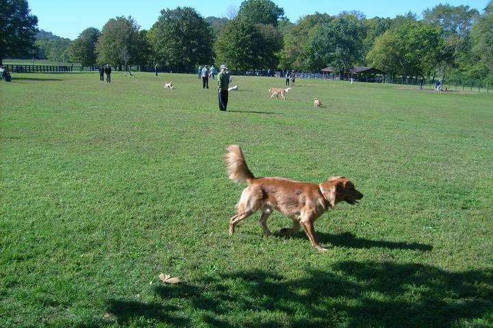 Pet Friendly Edwin Warner Dog Park