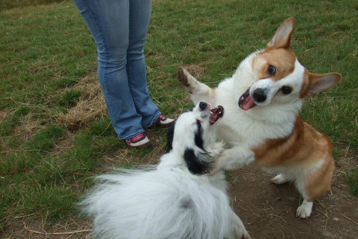 Pet Friendly Westcrest Dog Park