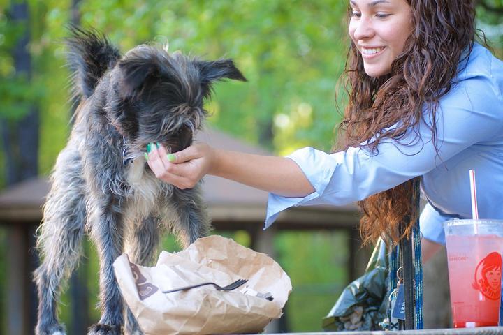 Pet Friendly Wheaton Dog Park