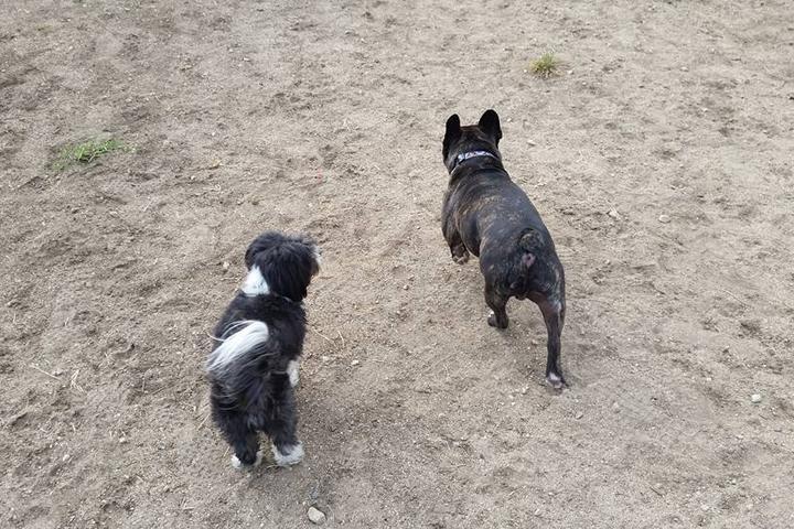Pet Friendly Whitnall Off-Leash Dog Park