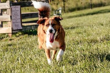 Pet Friendly Worthington Dog Park