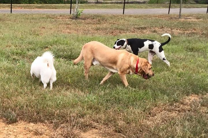 Pet Friendly Jackson Downtown Dog Park